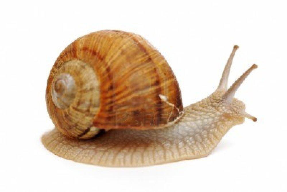 snails amp slugs arrestapest